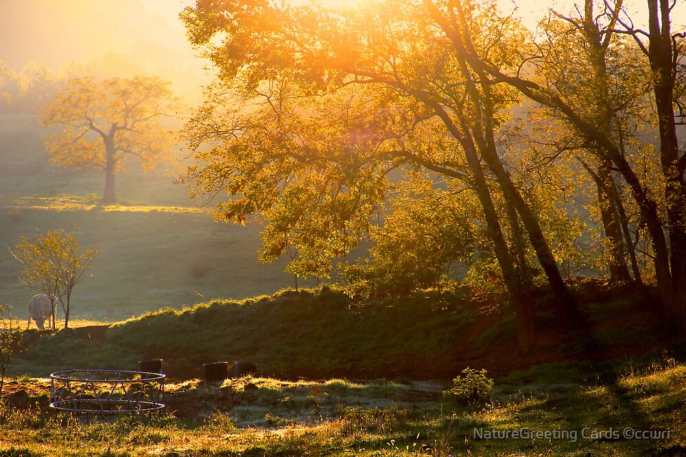 Last Golden Rays by NatureGreeting Cards ©ccwri