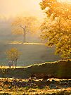 Golden Trees by NatureGreeting Cards ©ccwri