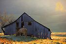 Evening At The Barn by NatureGreeting Cards ©ccwri