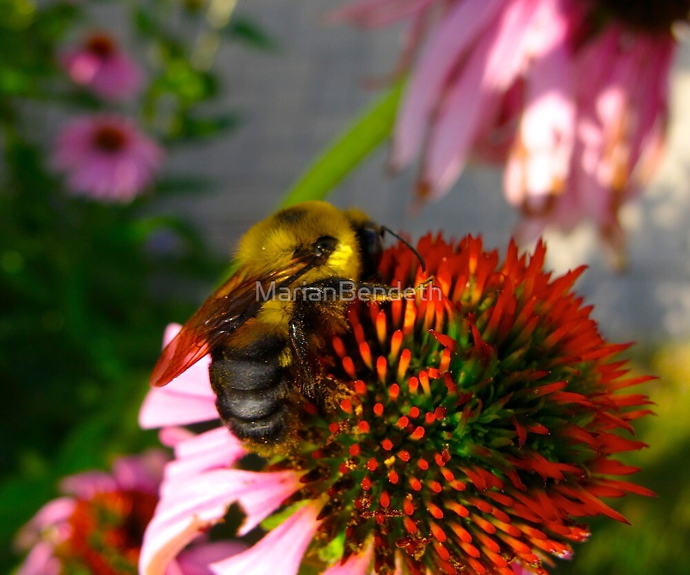 Natural Bee Balm by MarianBendeth