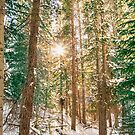 Winter Forest Sunshine by Bo Insogna