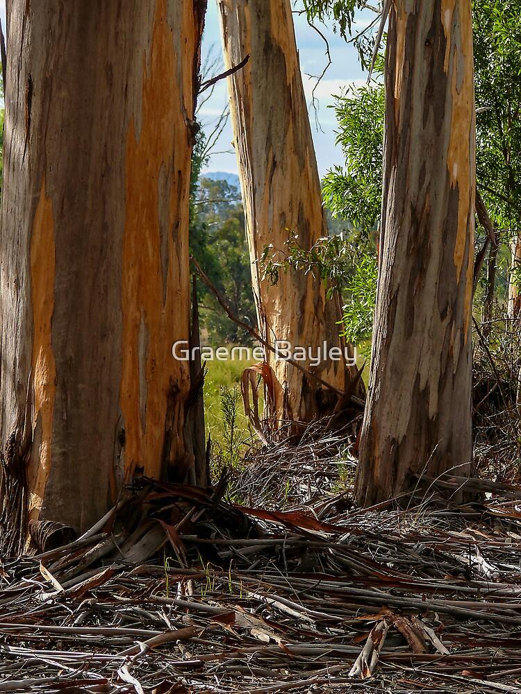 Stringy-Bark Gum Trees. by Graeme Bayley