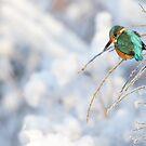 Wintering Kingfisher by Remo Savisaar