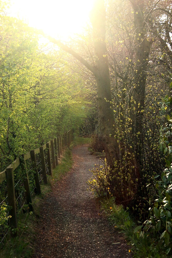 Nature's path by Jack Bishop