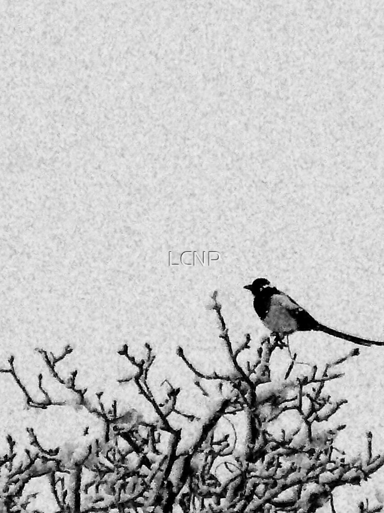 Magpie in Snow by LCNP
