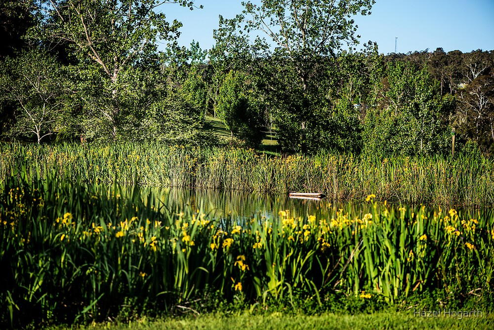 0264  Jenny's Garden by Hazel Hogarth
