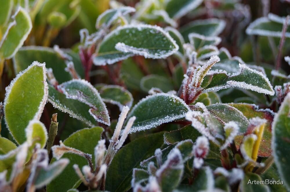 Frosty Winter Morning by ArtemBonda