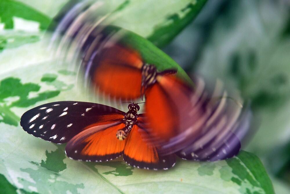 Flirting butterflies by Arie Koene