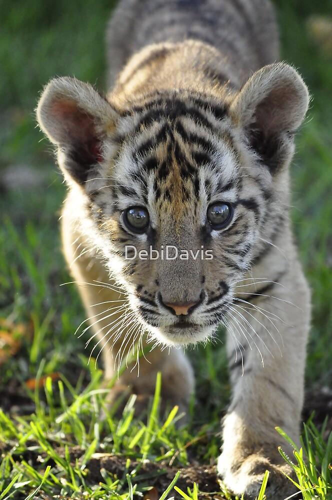 Orphan Tiger  by DebiDavis