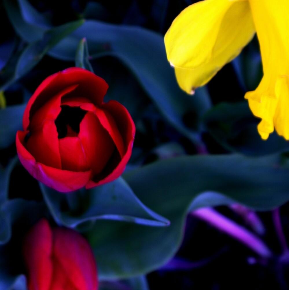roses by KhouloudAhmadi