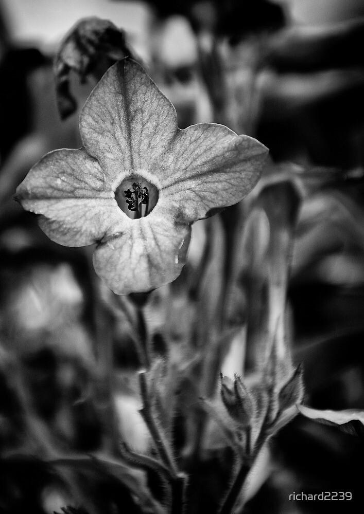 Flower by richard2239