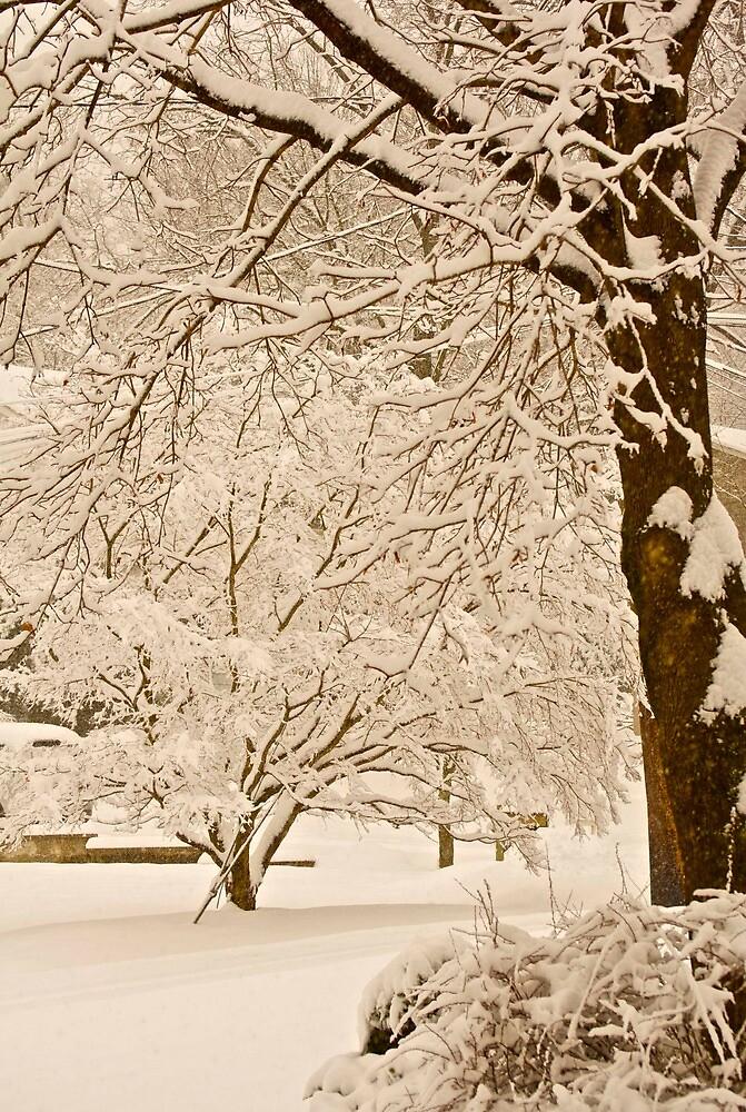 Sepia snow... by Cindy Rubino