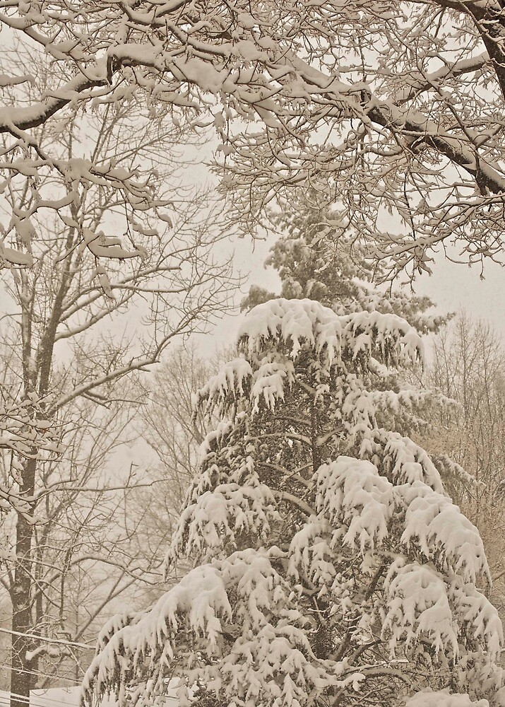 Heavy Trees... by Cindy Rubino