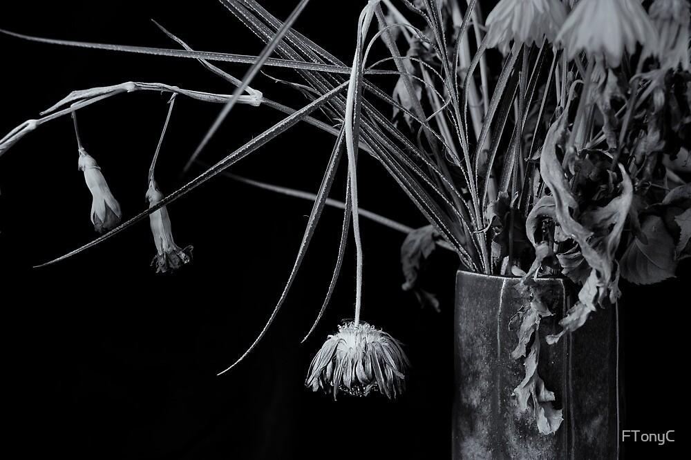 Dangle by FTonyC