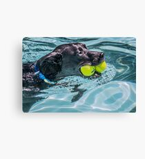 Ball Dog Canvas Print