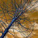 """Birch"" by BlackDove1128"