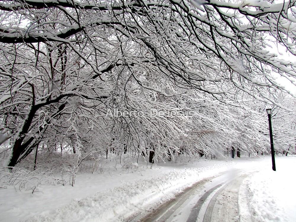 Winter day in New York City  by Alberto  DeJesus