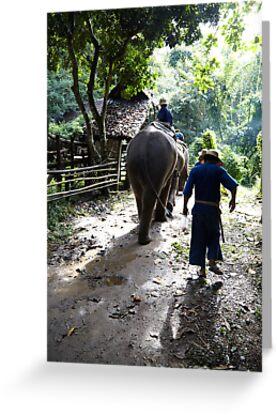 Elephant walk  by DebWinfield