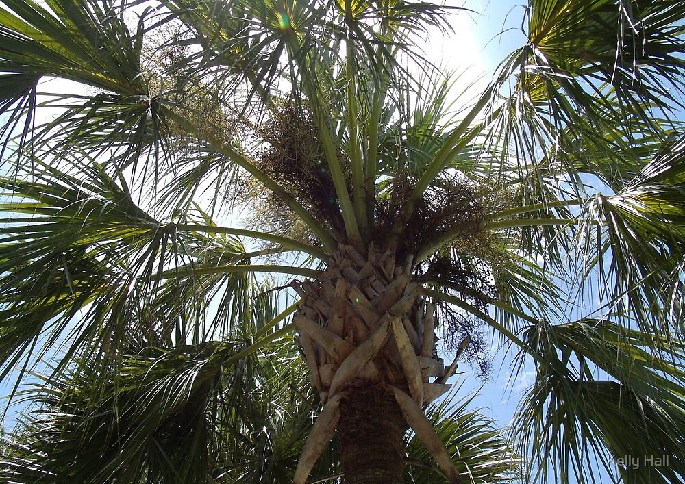 Florida palm by nutty1kel