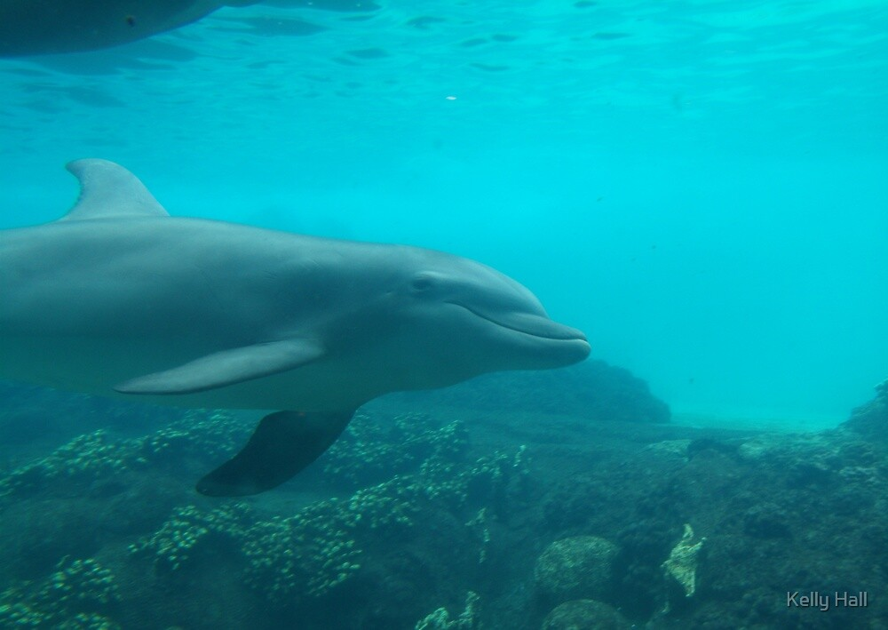 Swimming Dolphin by nutty1kel