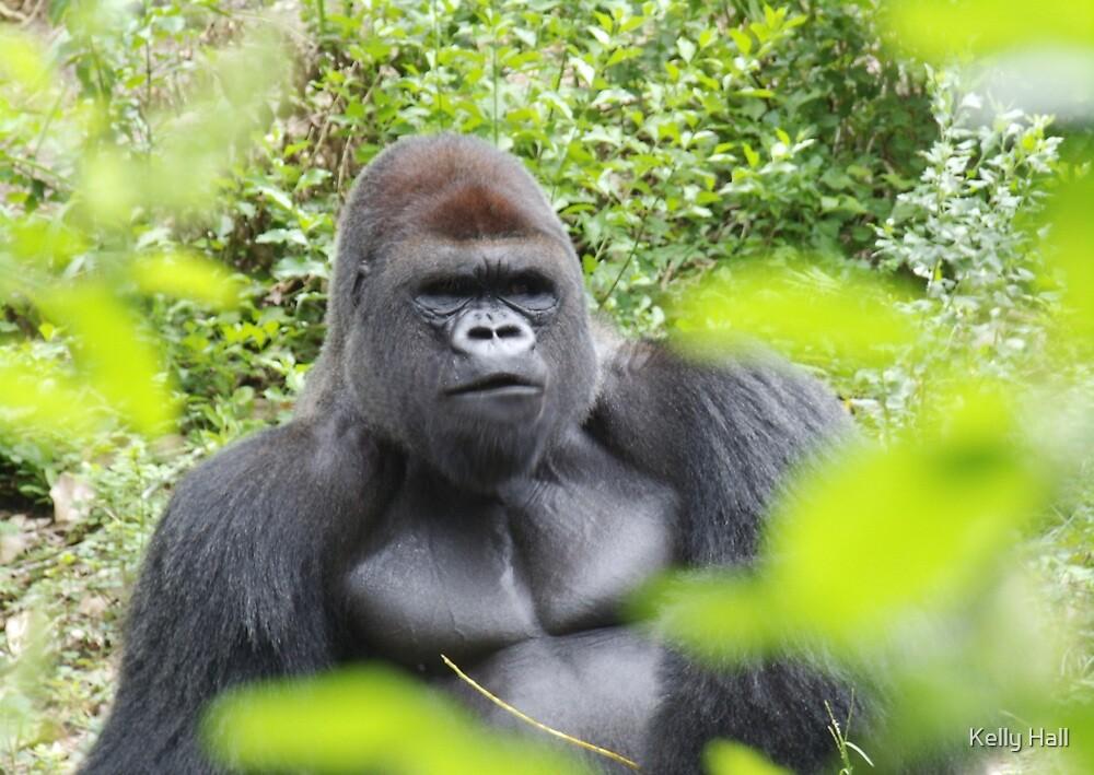 Silver Back Gorilla by nutty1kel