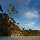 Golden Tree - South Bruny Island, Tasmania by PC1134