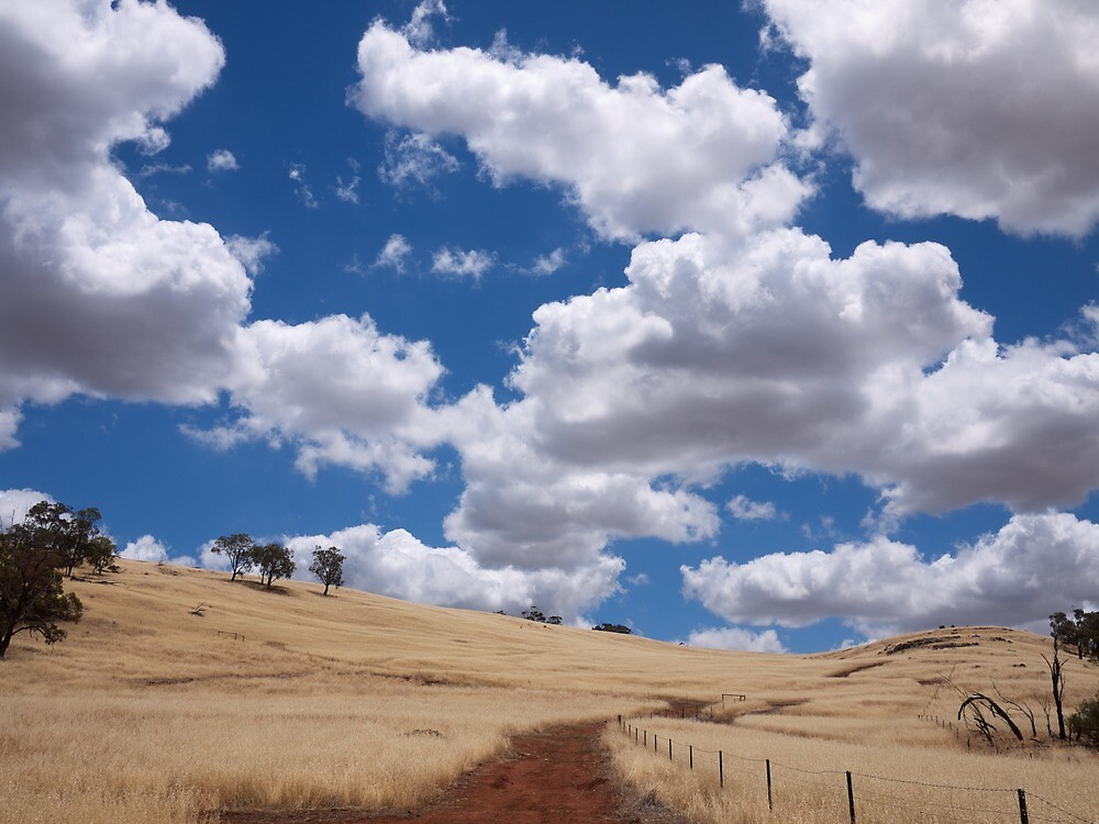 Outback by Alethea Rea
