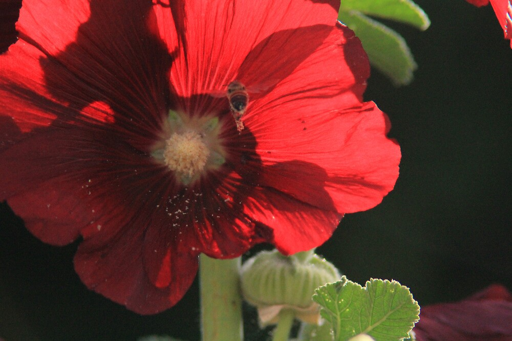 Red flower and Bee by Laura O'Dwyer