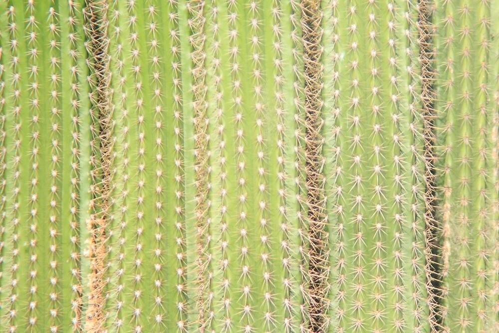 Feeling Cactus by Laura O'Dwyer