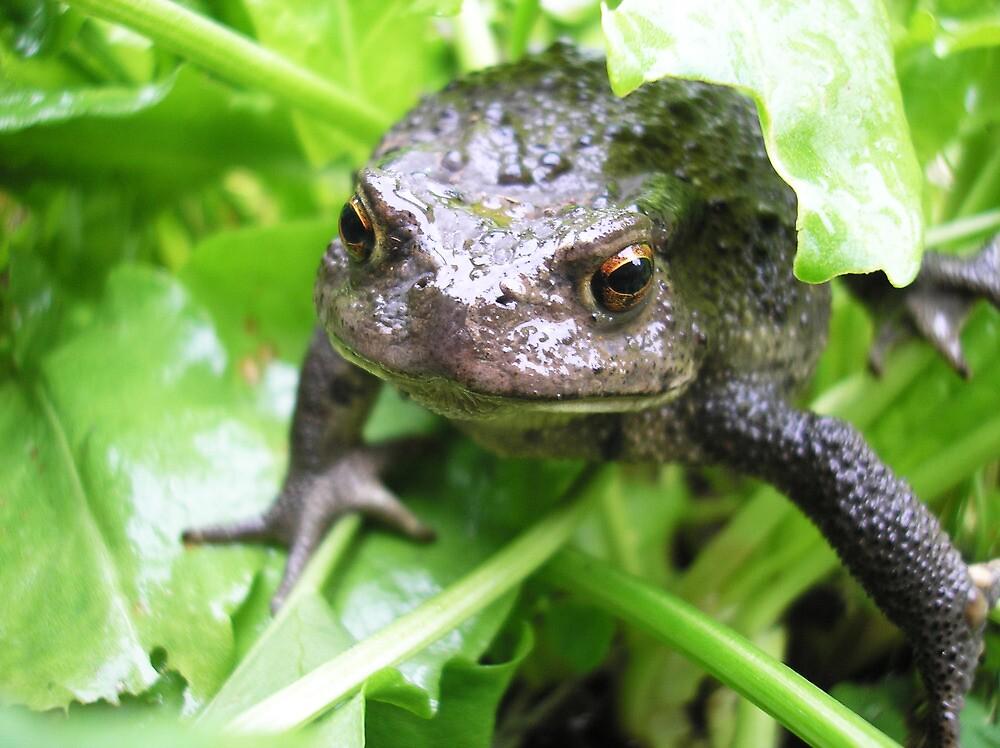 Frog by konovalenko