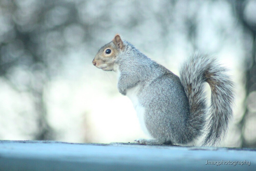 wheres the nuts ! by Jmagphotography
