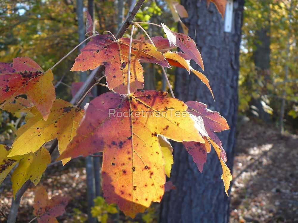 Autumn Leaf by RocketmanTees