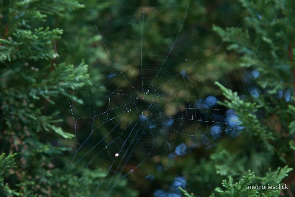 Webs of Love by memoriesclick