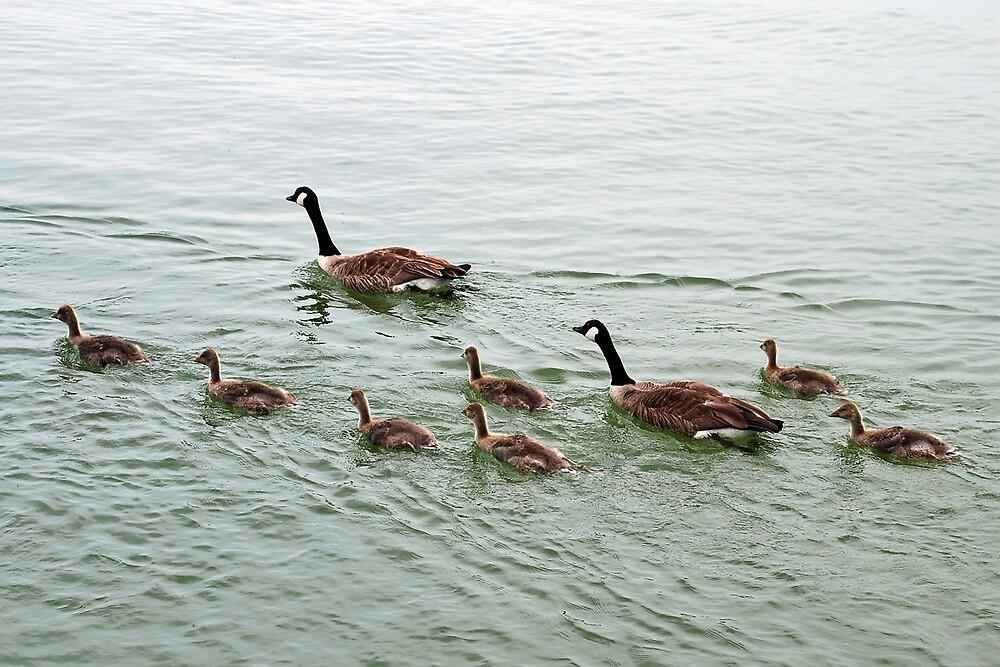 Full speed family by Arie Koene