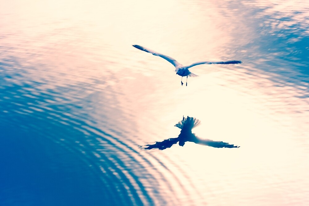 The Seagull's Reflection by Megan Campbell