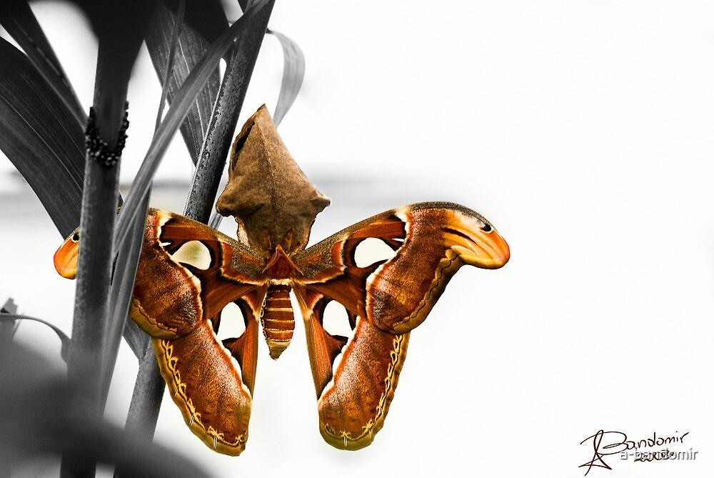 Butterfly by a-bandomir