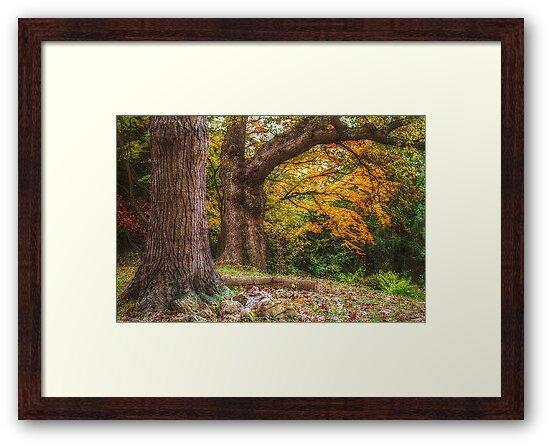 A Trip To Autumn by Christine Lake