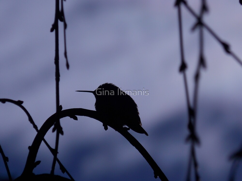 Hummingbird of the Shadow by Gina Ikmanis