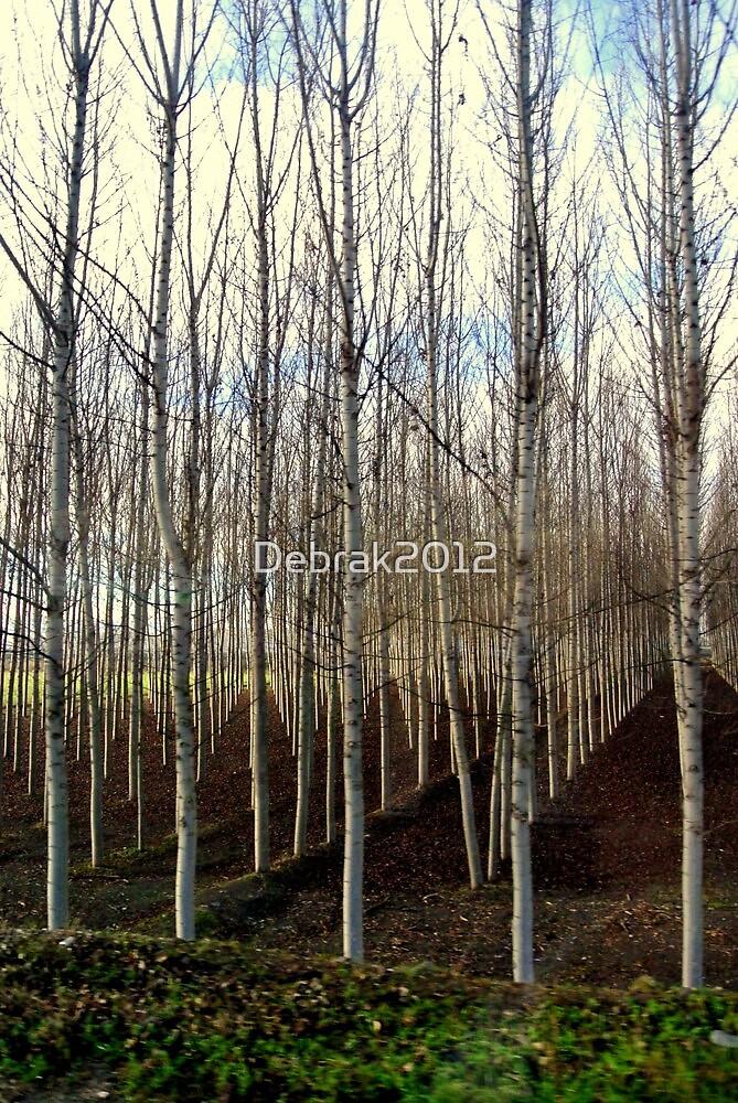 Trees from a bus window ,  by Debrak2012