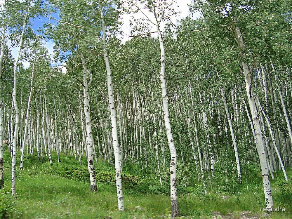 trees by resandra