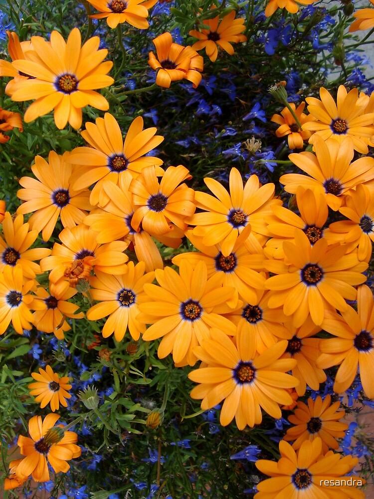 flowers by resandra