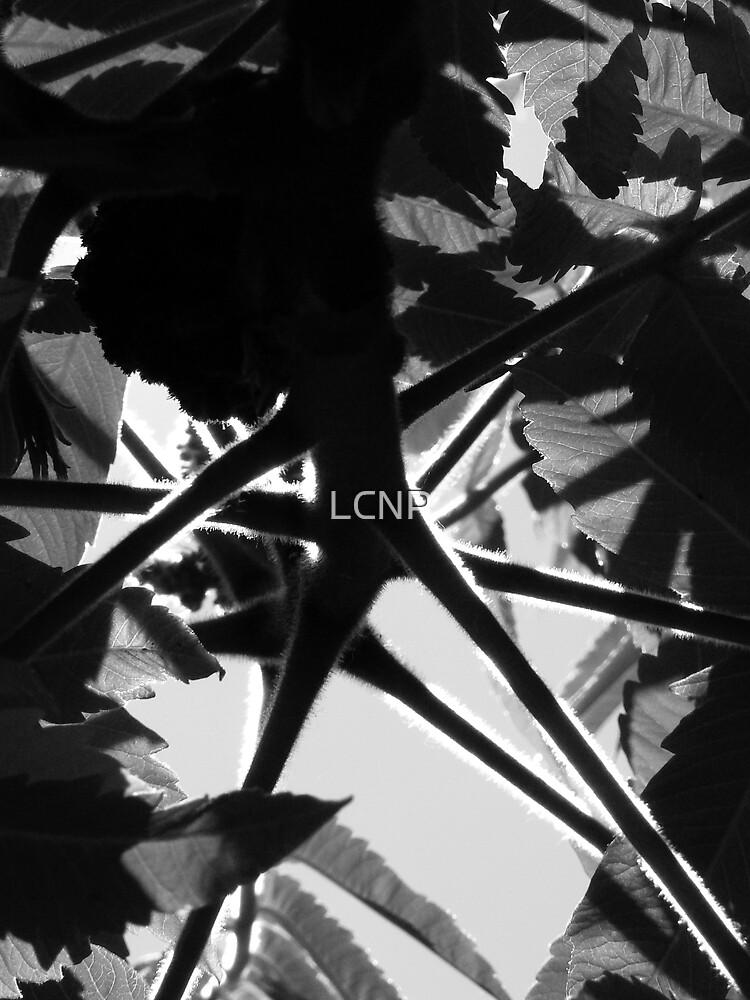Spider Branch Sumac by LCNP