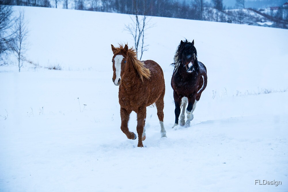 Horses in the snow by FLDesign