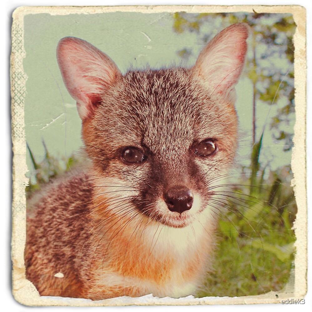 So Foxy! by eddiek3