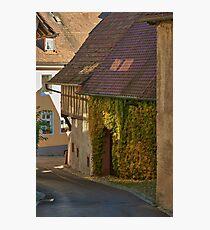 Burkheim, Kaiserstuhl - sunlight detail on vines Photographic Print