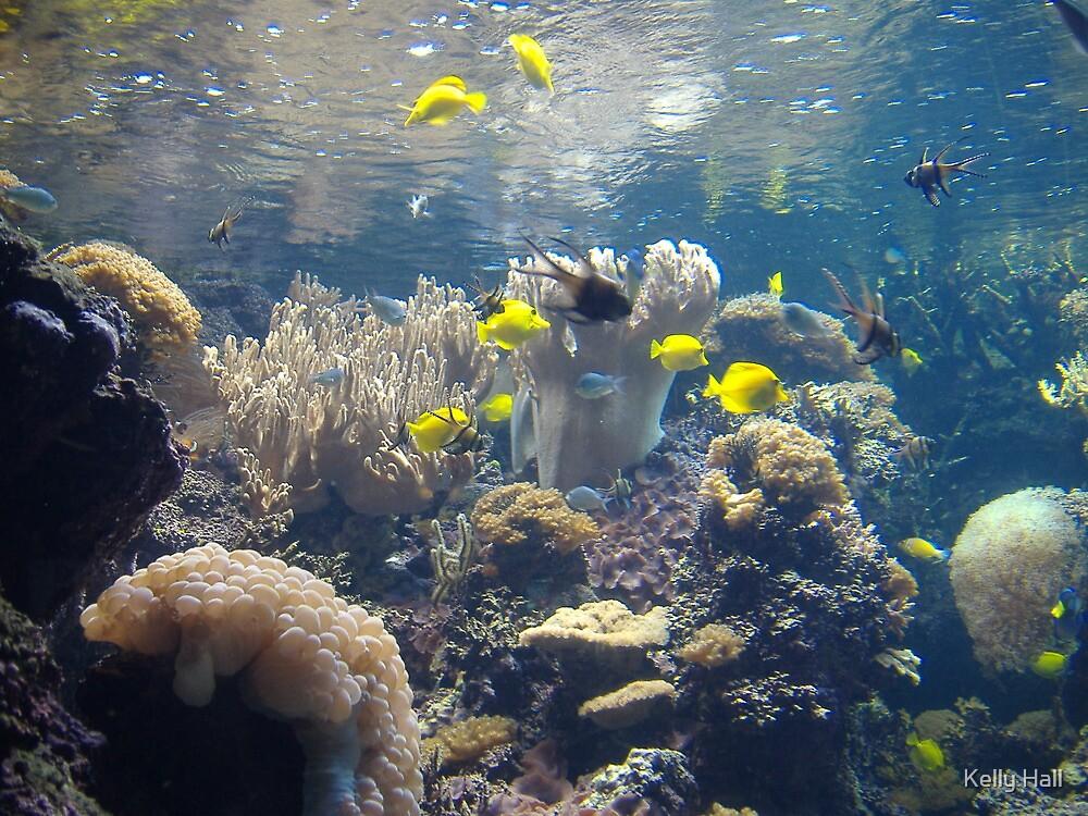 Under the sea by nutty1kel