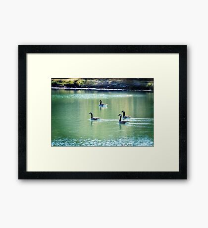 Geese On The Pond Framed Print
