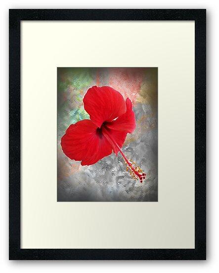 ©GS Red Hibiscus IAB by OmarHernandez