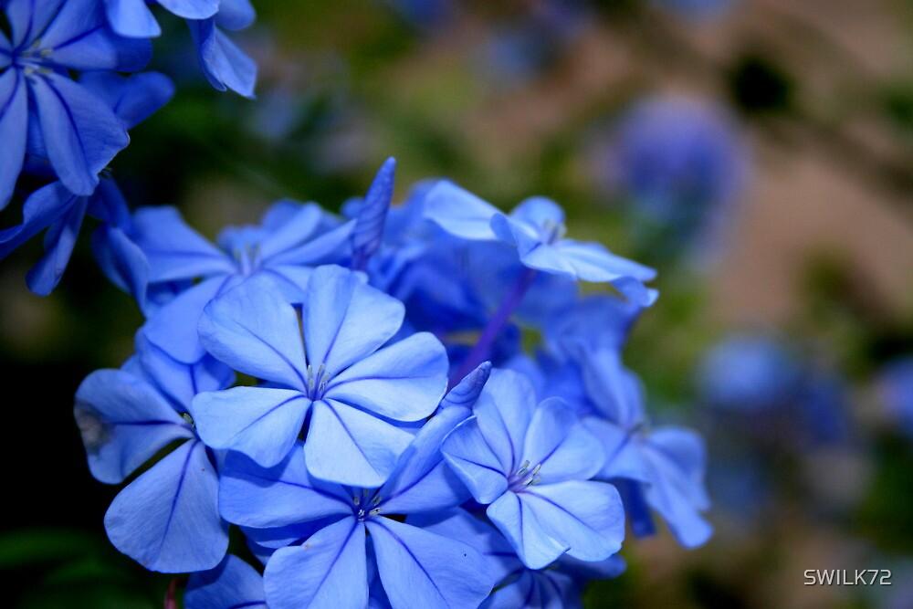 Blue Flowers by SWILK72