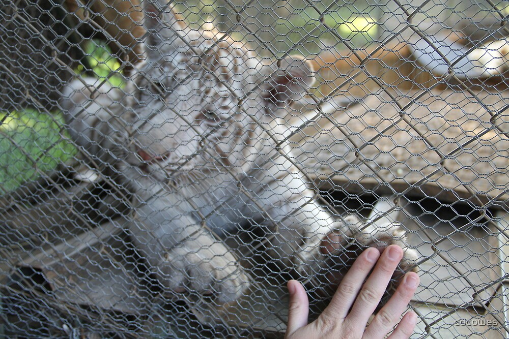 White tiger baby by cocowes